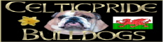Celtic Pride, English bulldog breeder in UK or England, Great Britain ou Angleterre ou Grande-Bretagne