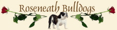 Roseneath bulldogs- English bulldog  breeder - South Africa - Afrique du sud